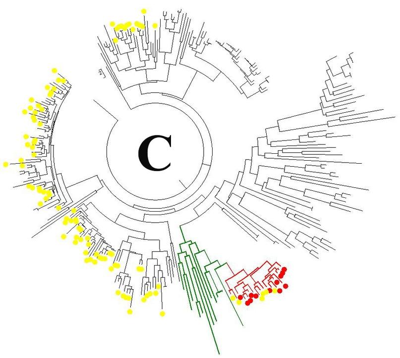 Пример ДНК-генеалогии казахов